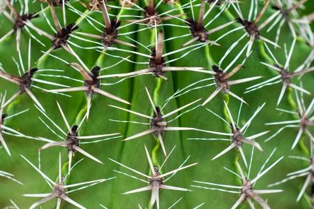 Close-up groene cactus met textuur groene stekelige naalden patroon voor de achtergrond