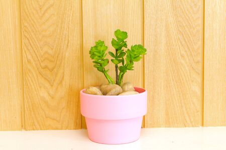 Collection of daisy tree in pink flowerpot on wood background  photo