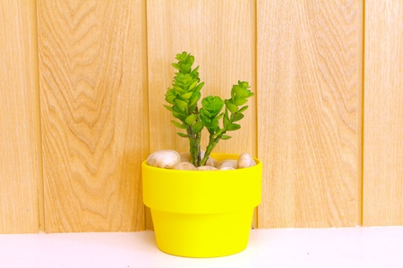 Collection of daisy tree in yellow flowerpot on wood background  photo