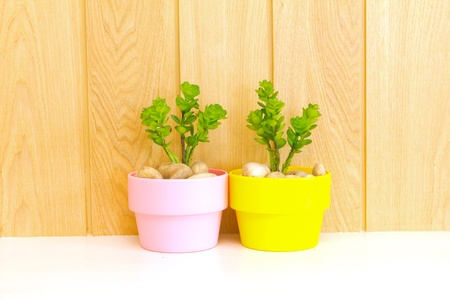 Collection of daisy tree in flowerpot on wood background  photo