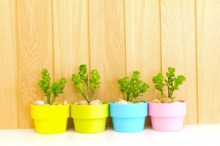 Collection of daisy tree in colorful flowerpot on wood background  Stock Photo