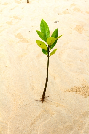 Young green plant growing on white sand beach.