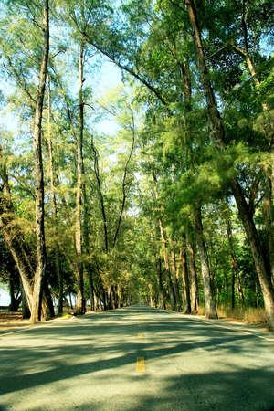 Local road beside the beach photo