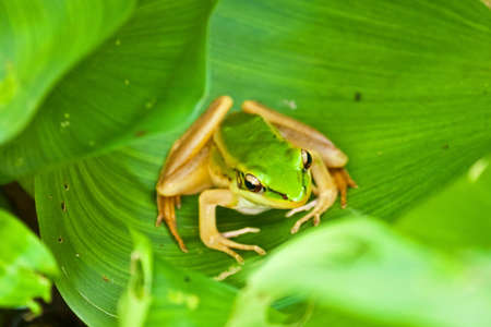 a frog on green leaf photo