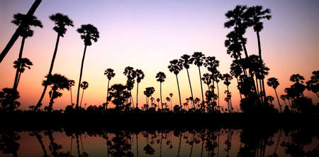 Twilight of palm trees in Thailand photo