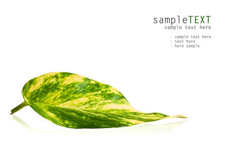 Green leaf isolated on white background Stock Photo - 8656053