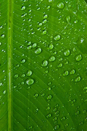 Texture of droplet on green leaf photo