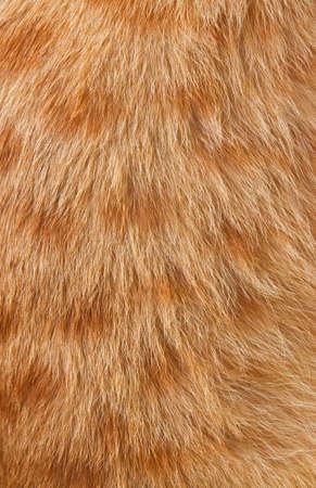 pet fur texture photo
