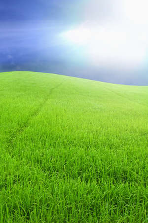 Landscape of green rice farm Stock Photo - 9242655
