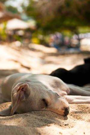 Dog sleeps on the beach photo