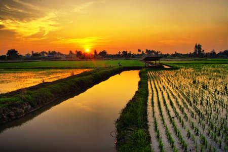 Puesta de sol en la granja de arroz verde en Tailandia Foto de archivo