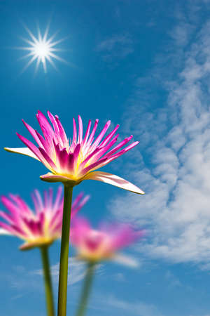 Pink lotus against cloud blue sky and sunrise