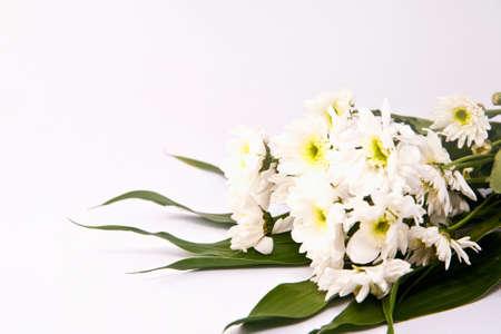 Bunch of white chrysanthemum flower isolate on white photo