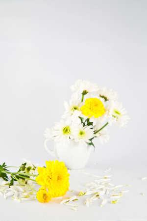Yellow and white chrysathemum flower photo