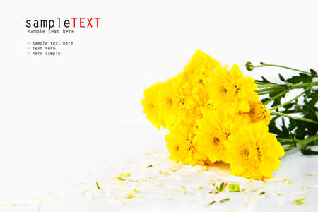 Bunch of yellow chrysanthemum flower isolate on white Stock Photo