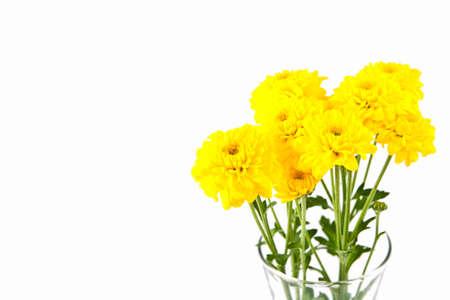 Yellow chrysanthemum flower isolate on white photo