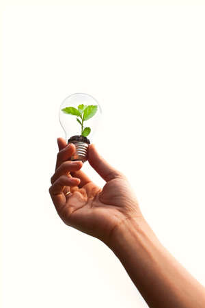 Hand hold green plant in light bulb isolate on white Stock Photo - 9420984
