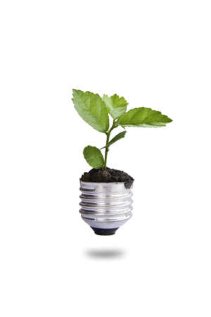 Green plant in light bulb, can be used for go green concept photo