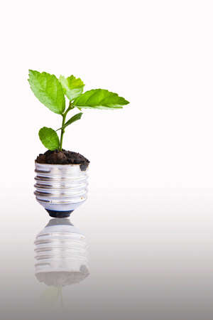 Green plant growing up through light bulb, can be used for go green concept Stock Photo
