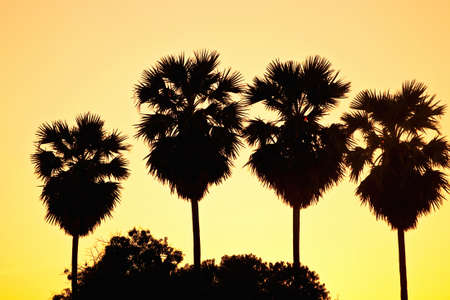 Palm trees silhoutte on sunset background photo