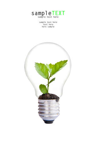 Green plant grow up in light bulb photo