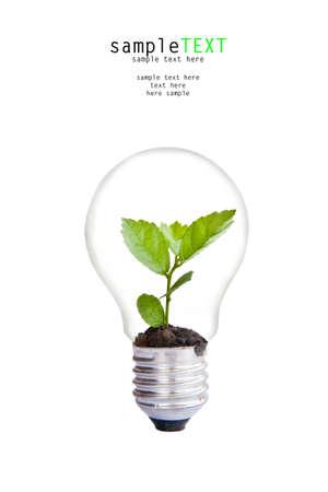 innovacion: Planta verde crecen en la bombilla