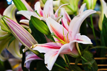 Bunch of lily flower photo