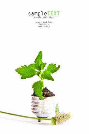 Green plant grow up in light bulb Stock Photo - 9551230