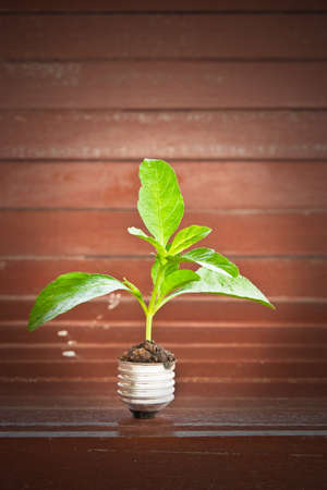green plant grow up through light bulb on wooden background Stock Photo - 9551349