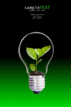 Green plant grow up through light bulb Stock Photo - 9602522