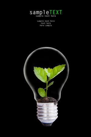 Green plant grow up throgh light bulb Stock Photo