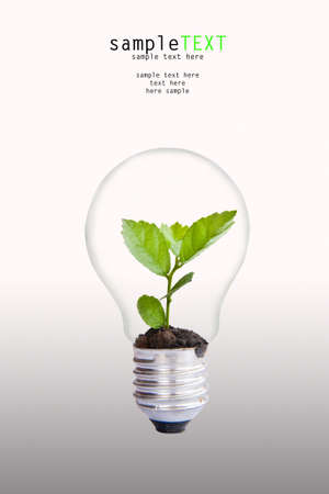 Green plant in light bulb