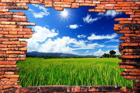 Backsteinmauer mit Loch enthüllt grünen Reis Bauernhof und Wolken Standard-Bild