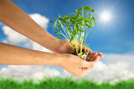 Hand holding green tree against landscape background Stock Photo - 9859159