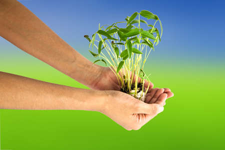 Hand holding bean sprouts tree Stock Photo - 9859156