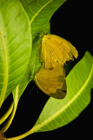 Butterfly and green leaf Stock Photo