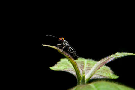 Little capricon insect standing on green plant photo