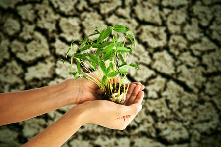 Hand holding green tree, against crack soil background photo