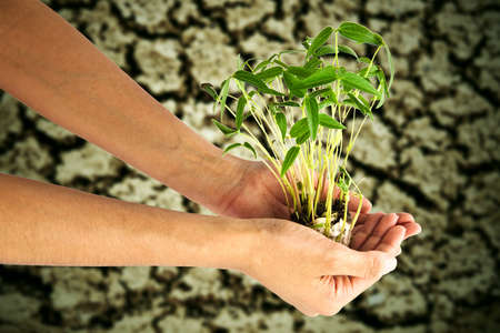 Hand holding bean sprouts tree, against crack soil background Stock Photo - 9990527