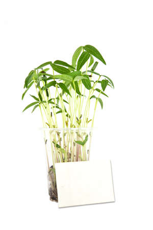 White card and bean sprouts tree Stock Photo - 9990503