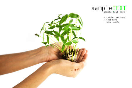 Hand holding bean sprouts tree, isolate on white  Stock Photo - 9990497