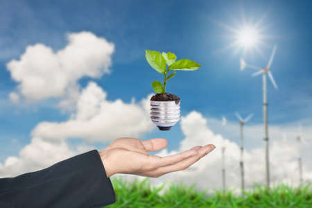 Hand holding green tree growing in light bulb Stock Photo - 10078566