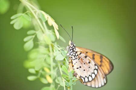 Closeup butterfly climbing on green leaf