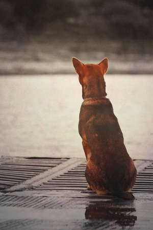 dogs sitting: Lonely dog waiting for someone on the boat