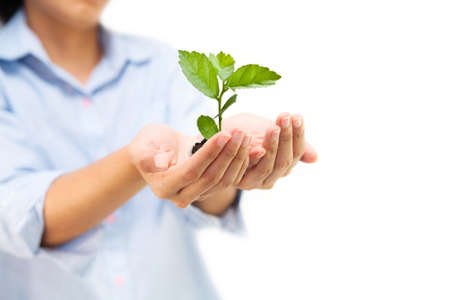 Hands holding green tree, can be used for go green concept