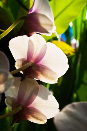 Beautiful orchid flower photo