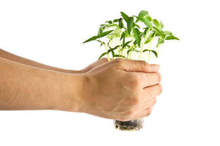 Hand holding green tree, isolate on white background Stock Photo - 11216549