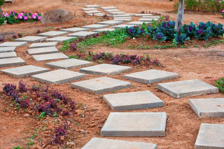 Walk path in garden flower photo