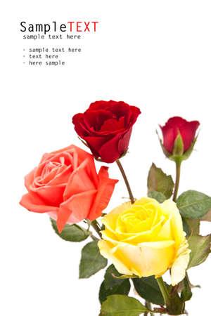 Rose fleur sur fond blanc Banque d'images - 13923689