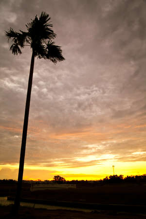 Silhouette palm tree against sunset background Stock Photo - 14184121